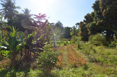 Photo d'un jardin créole - Céline Chevalier